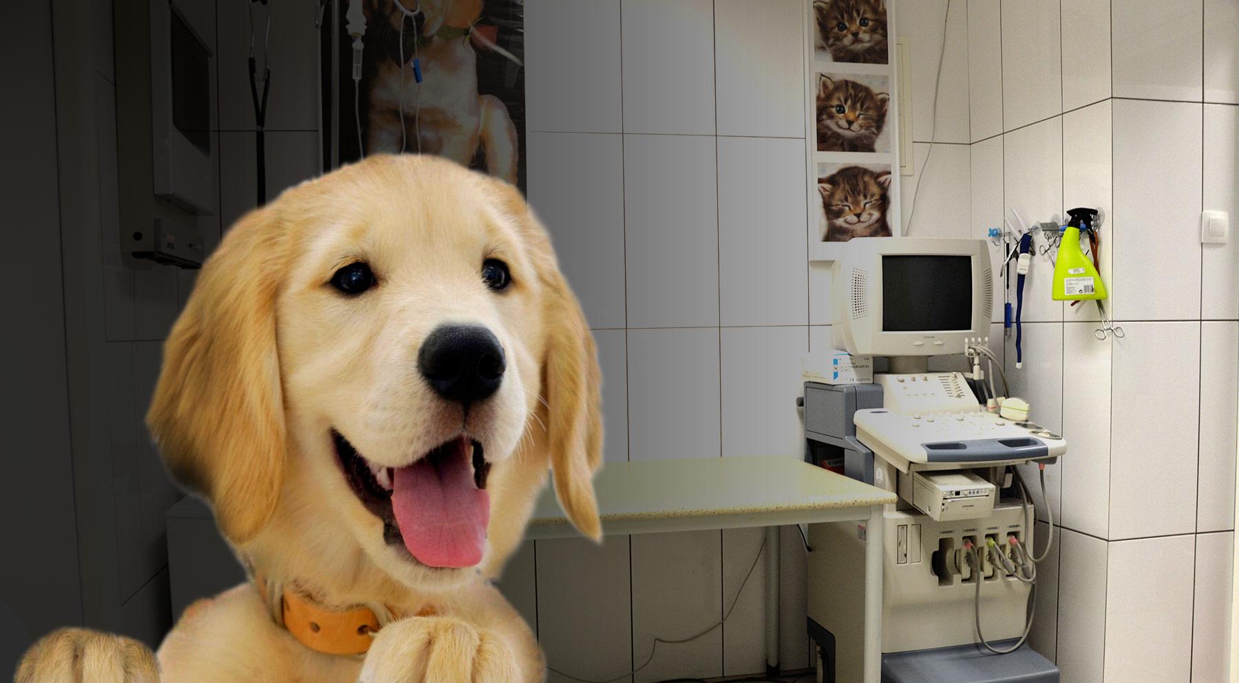 Badania mikroskopowe, krwi, USG, EKG, RTG